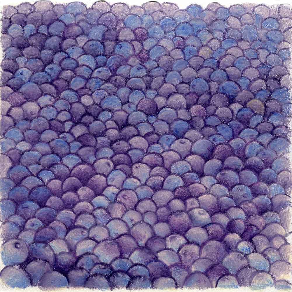 Harvest: Blueberries