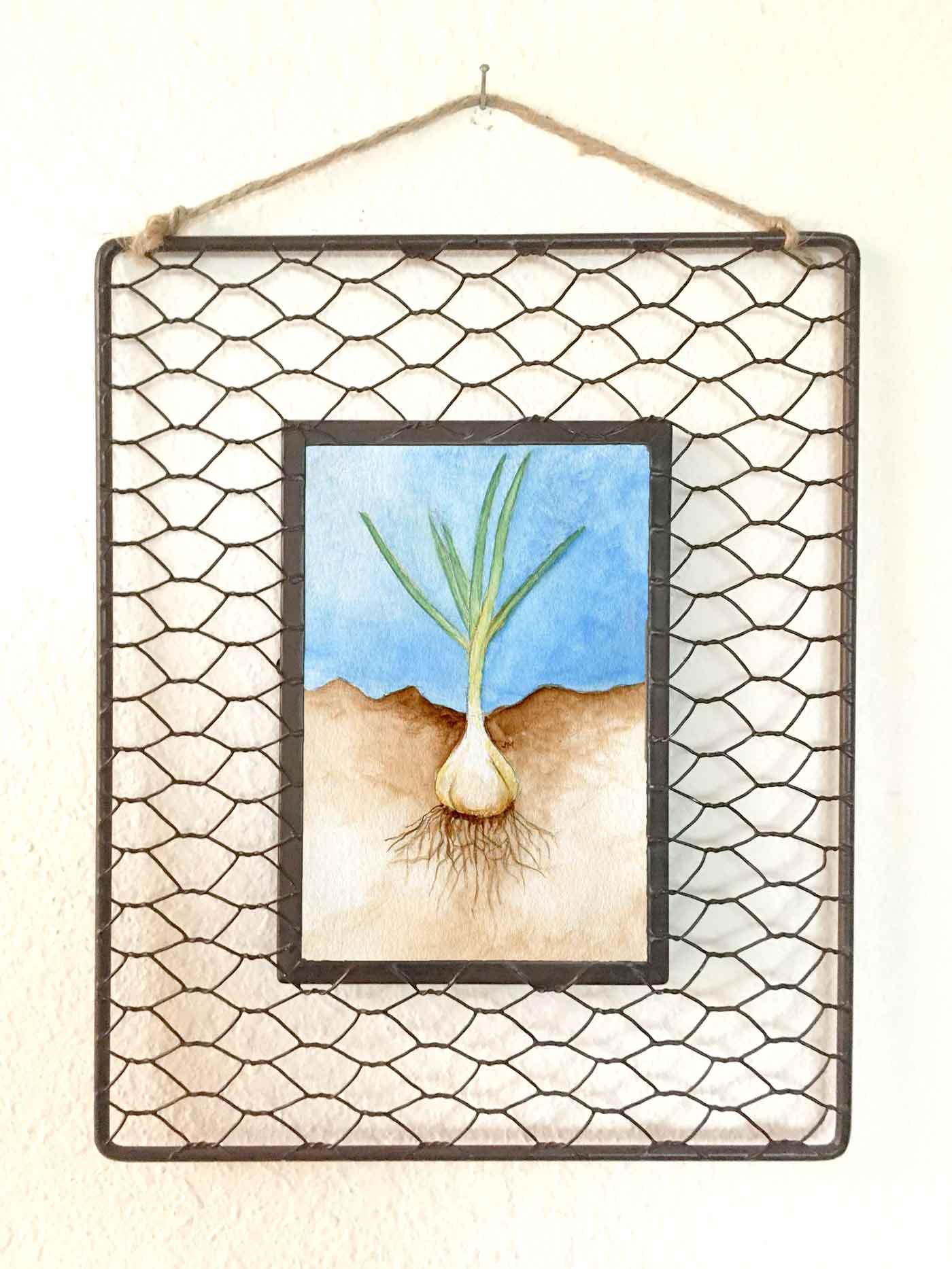 Roots: Garlic