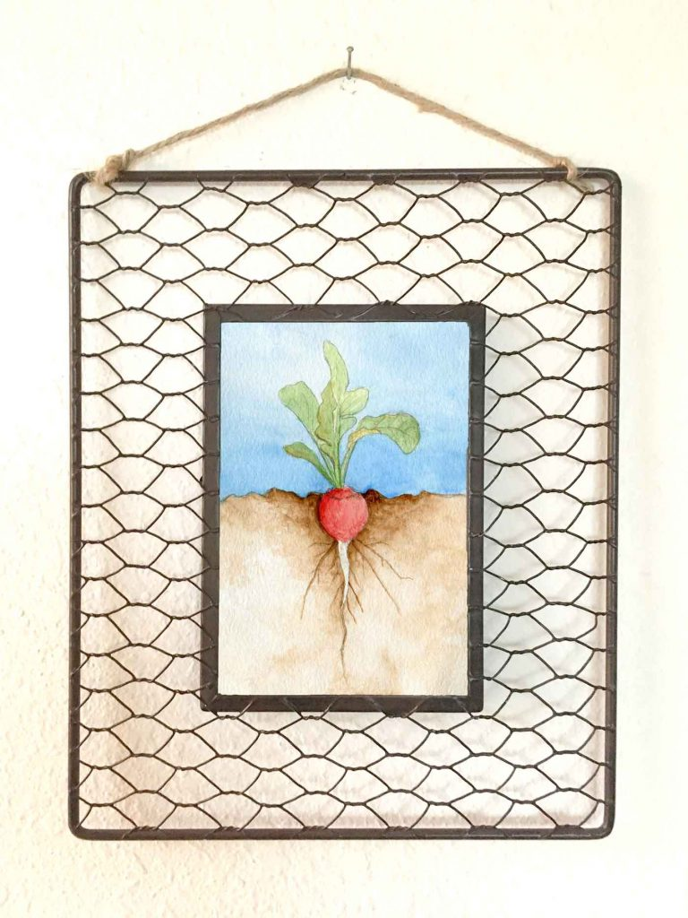 "Roots: Radish • 8""x10"" framed"