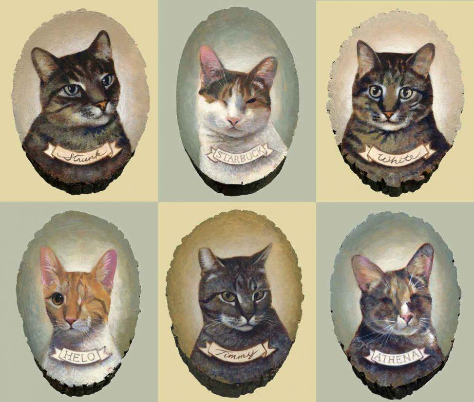 Cat portraits galore